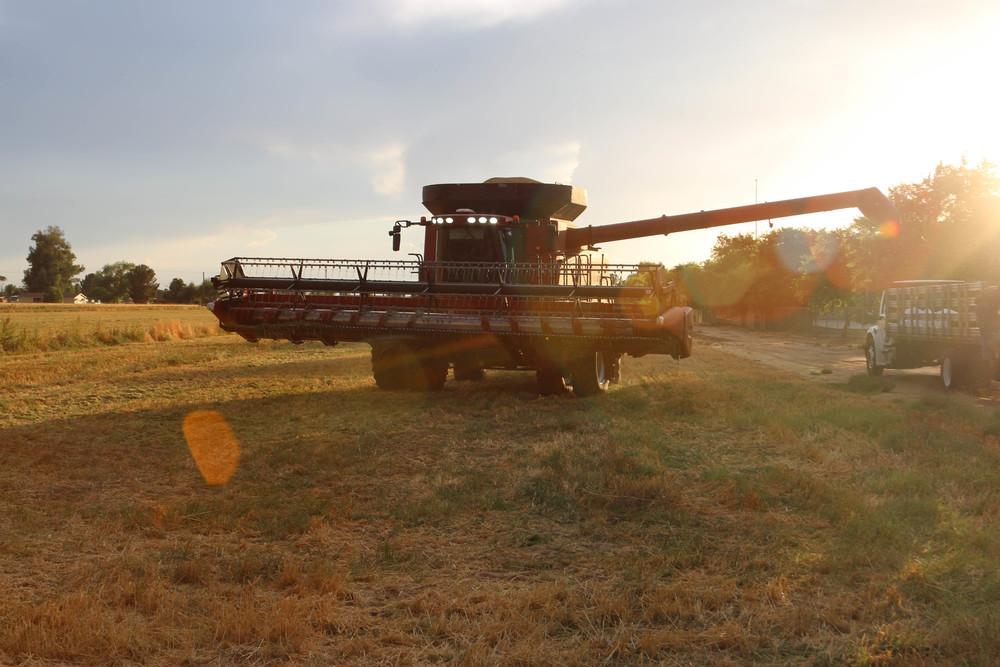 harvest 2015-8.jpg