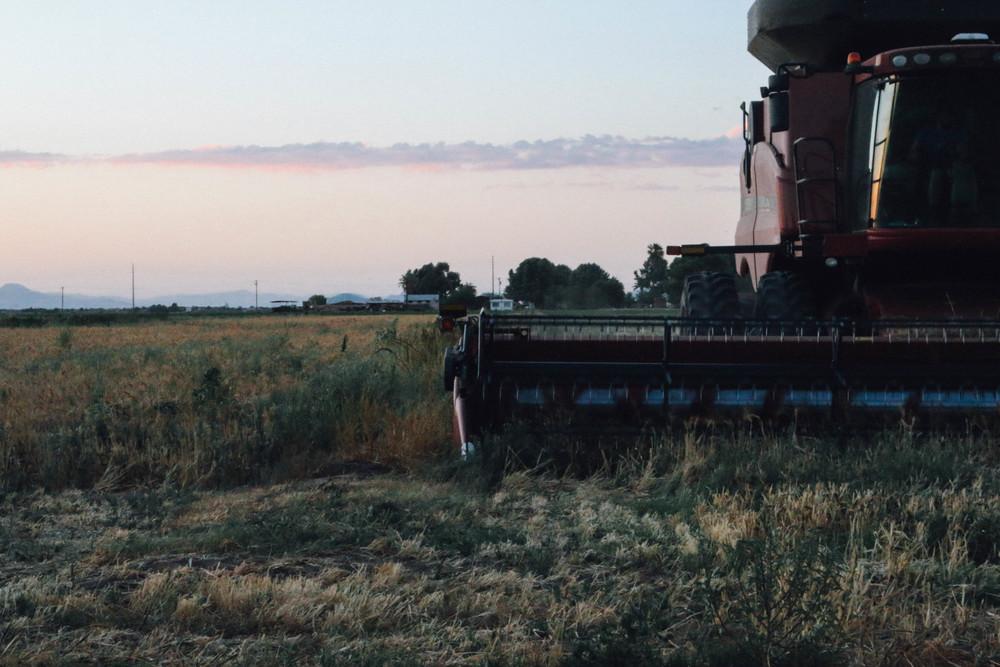 harvest 2015-13.jpg