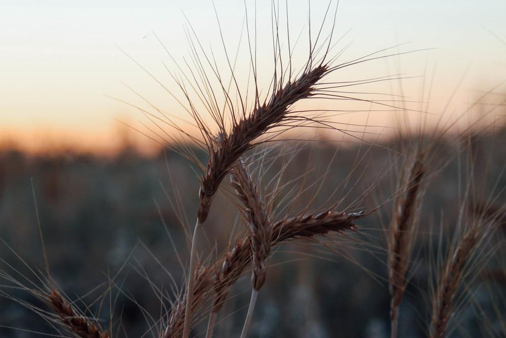 harvest 2015-14.jpg