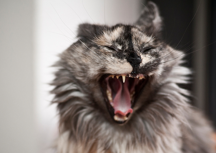 Cat Yawning With Teeth Missing.  Clearly a piece of stunning art, but maybe not what you were looking for.