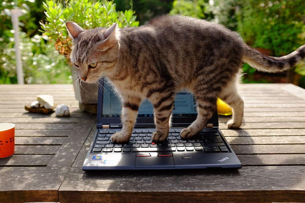 """... und das Knurps entwickelte sich zu einer echten Hilfe im Arbeitsalltaggglerjidsir!!""""3832ß???."""