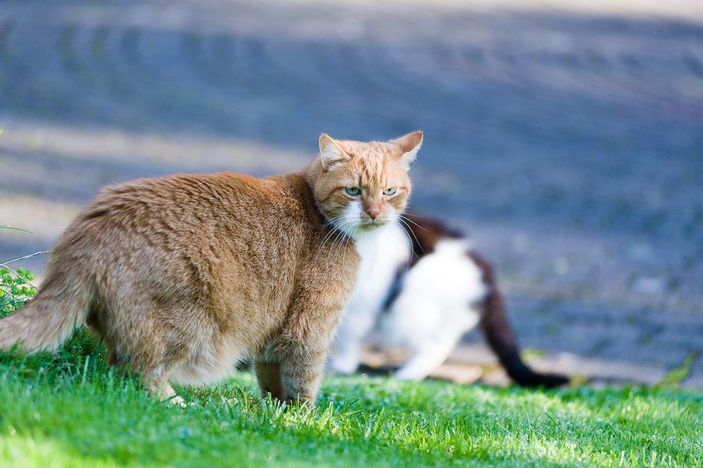 Fritz und die möglicherweise vorsichtigste Attacke aller Zeiten.