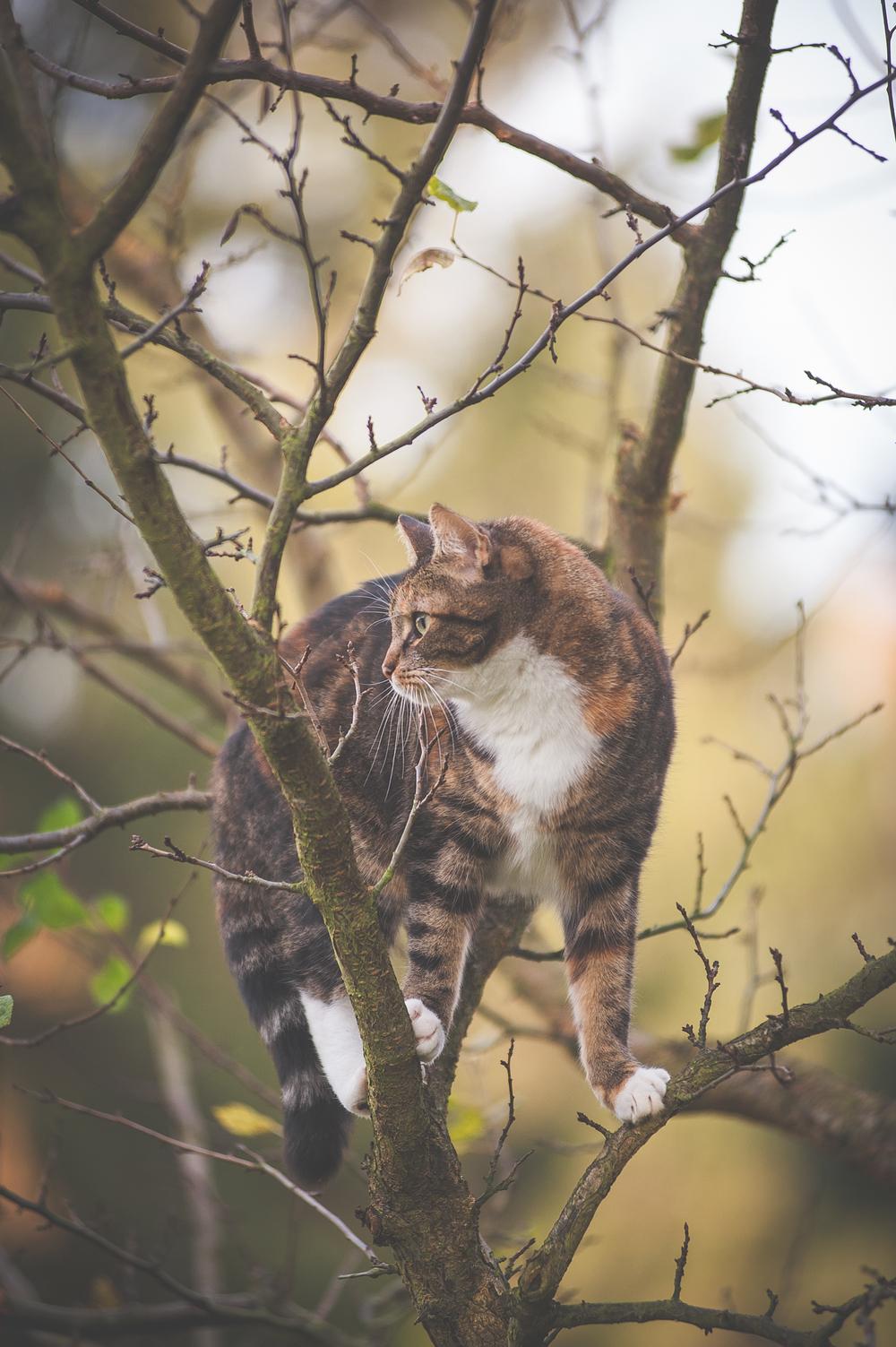 Und immer wieder auf den Bäumen. Quietsch suchen, hiess nach oben schauen.