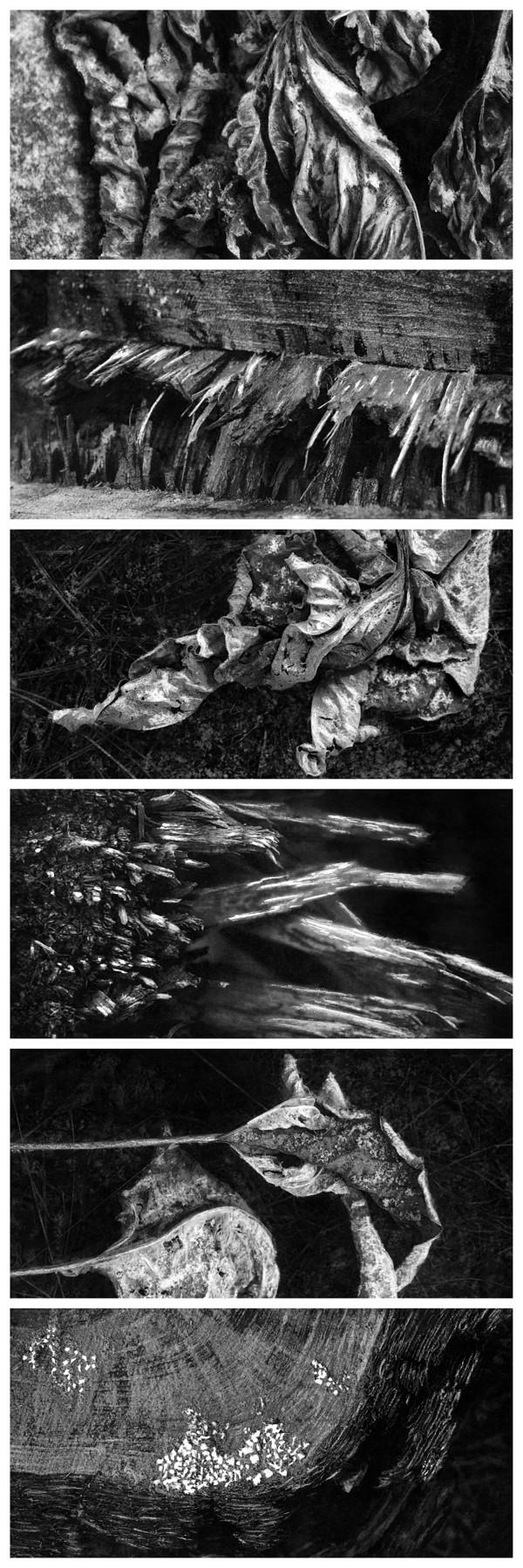 Ars Dormiendi (The Art of Sleeping)