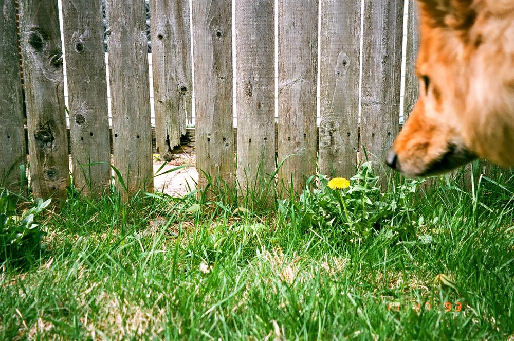 Broken Fence Print.jpg