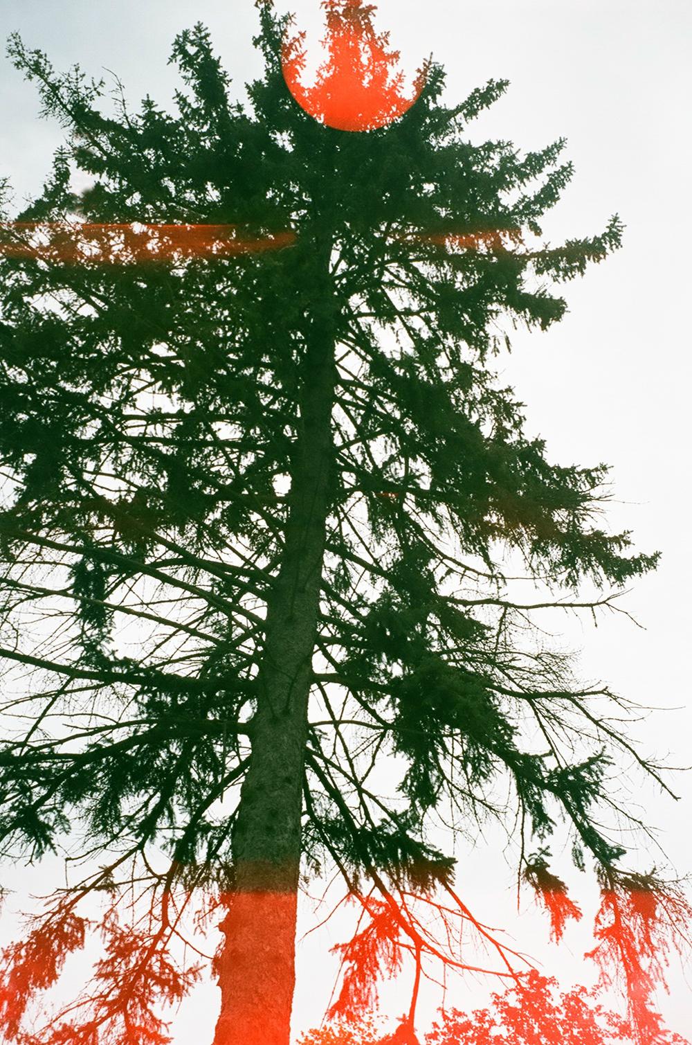 tree print.jpg