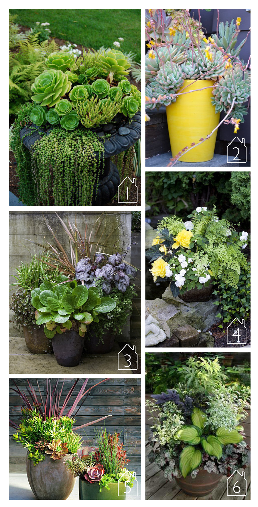 1. Urn with chicks, hens and pearls via  ABC das Suculentas   2. Yellow echeveria flowers with succulents via  Potted  3. This collection of perennials via  Houzz  4. Shade container via  Gorgeous Flowers, Garden and Love  5. These plum-colored foliage arrangements via  Sunset  6. Hosta Container via  Shady Oaks
