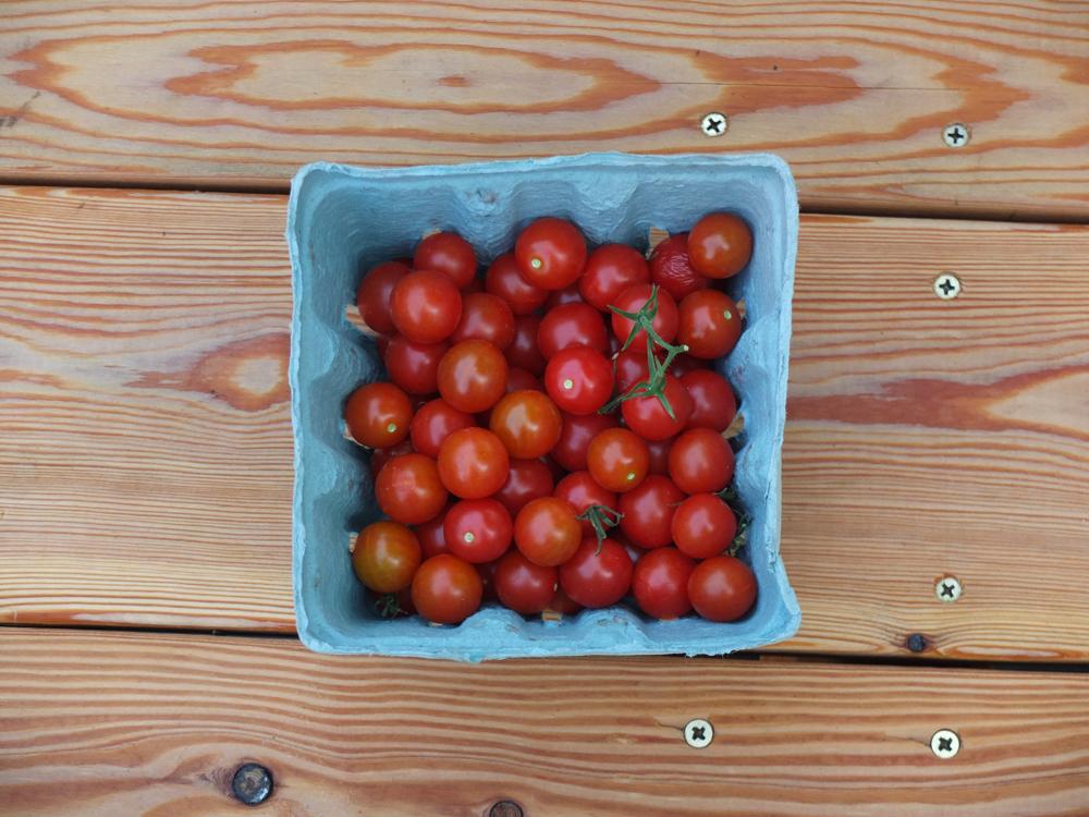 Tomatoes-00.jpg