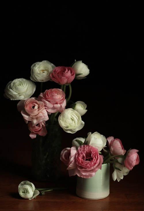 LucySnowe-Ranunculus.jpg