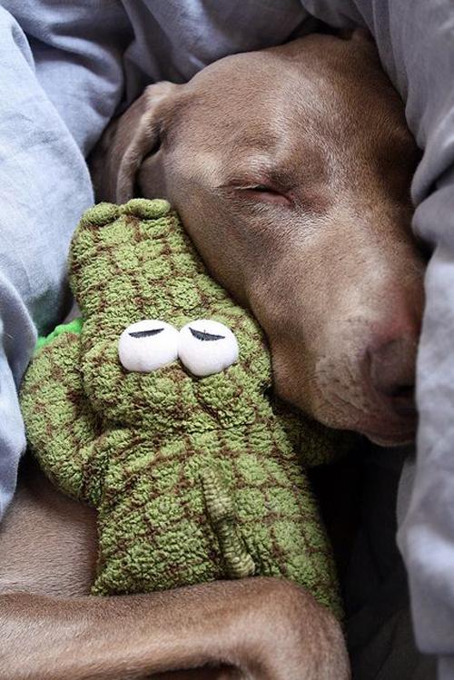 Dogs-Dohlongma.jpg