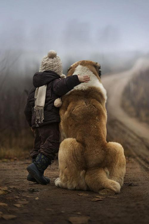 Dogs-Big.jpg