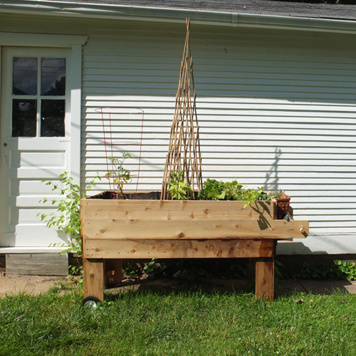 garden update june 11, 2013
