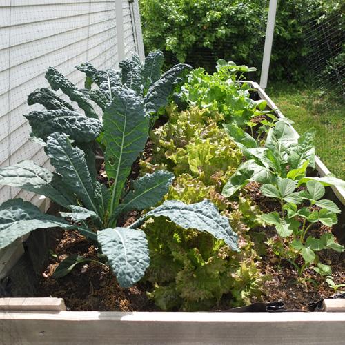 garden update may 8, 2014