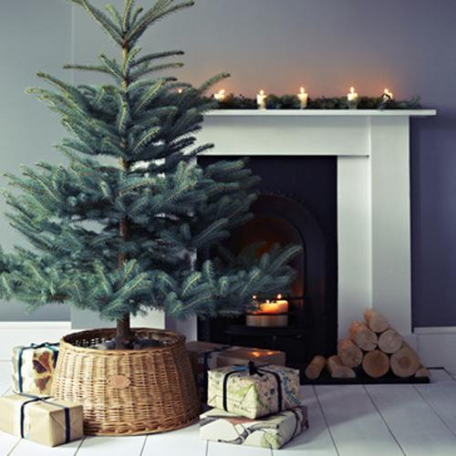 christmas tree december 23, 2013