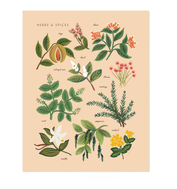 Herbs & Spices by Rifle Paper Co.