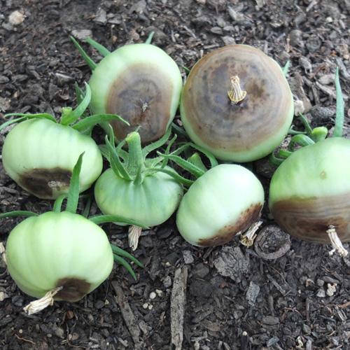 long overdue garden update july 18, 2014