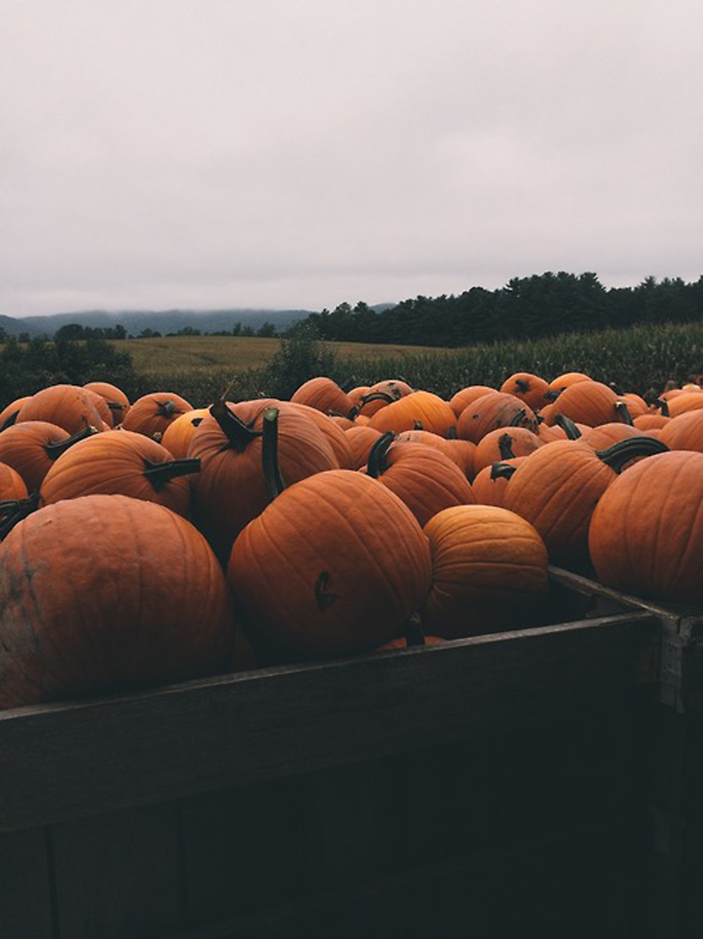 pumpkins preferably self picked pumpkins are a must - via  tumblr