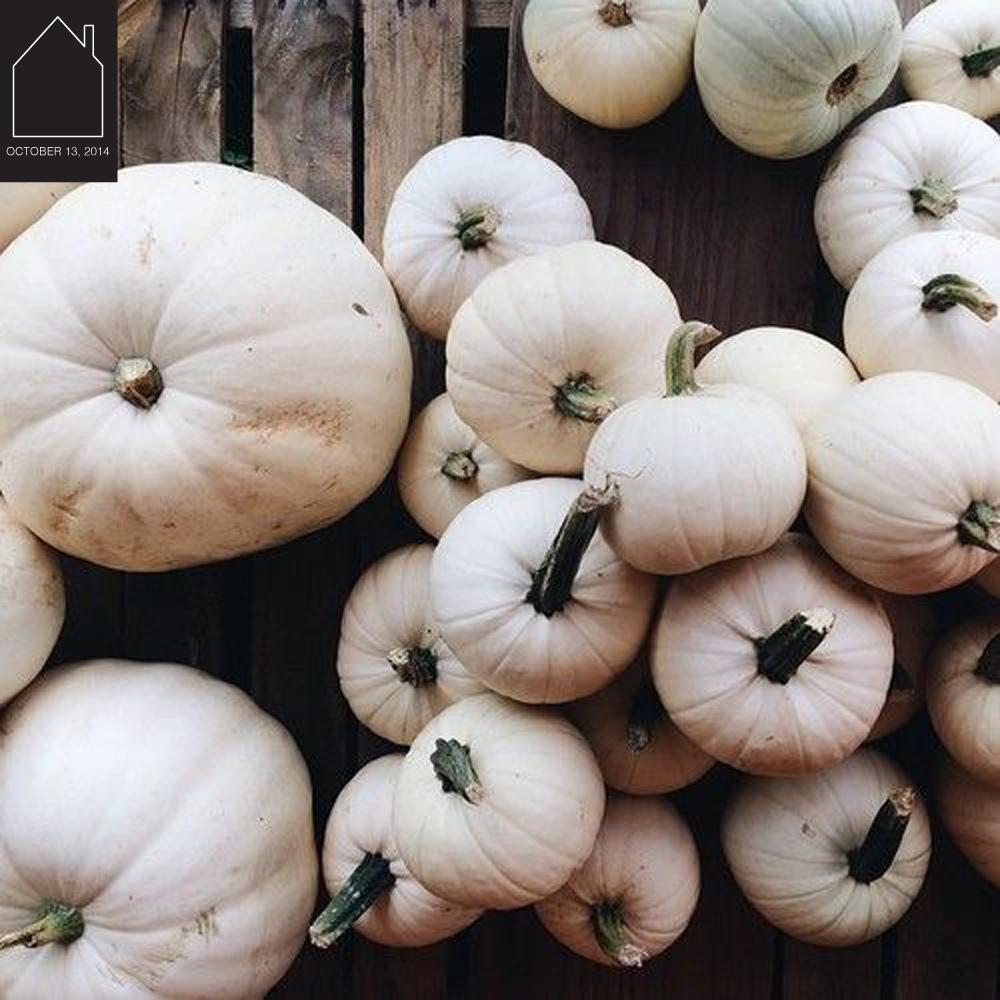white pumpkins via OldJoy
