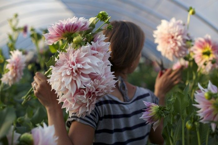 garden-pinners-floret-farm-2.jpg