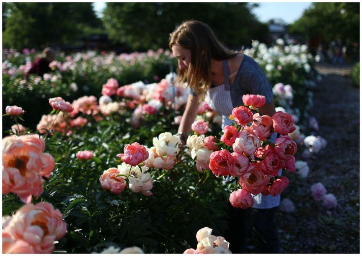 garden-pinners-floret-farm-1.jpg