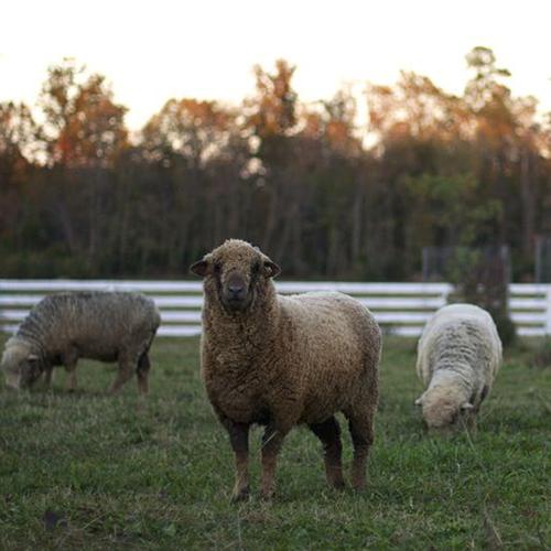 nordt family farm september 4, 2014