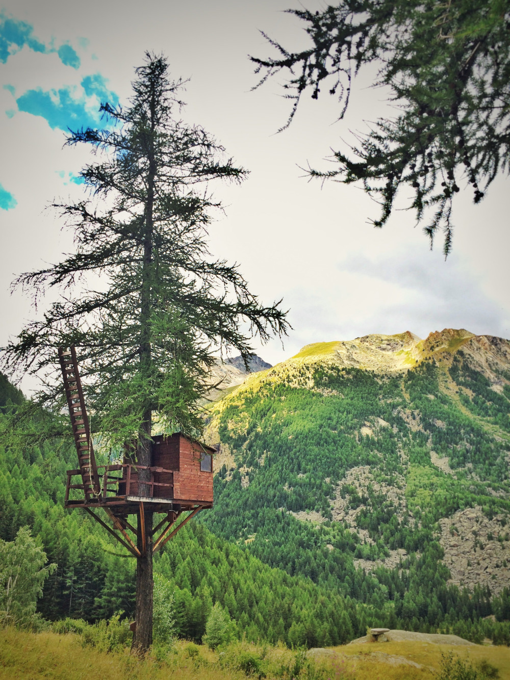 Treehouse  in Gran Paradiso National Park near Cogne, Aosta, Italy