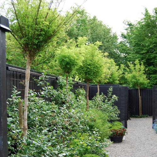 black fences march 28, 2014