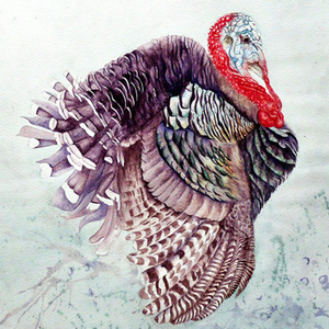 being thankful + turkey illustrations | 11.26.2014