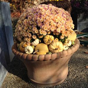 detroit garden works | 10.29.2014