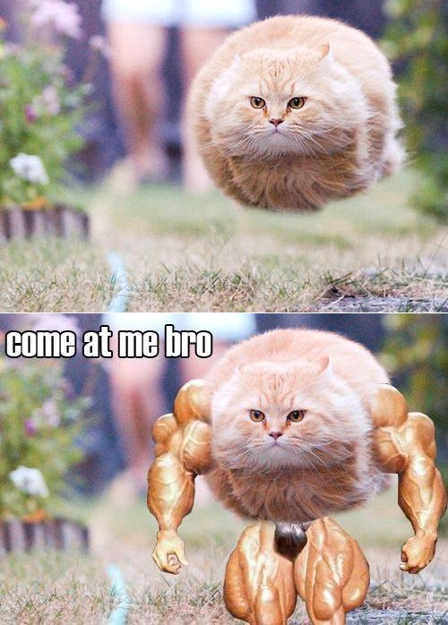 Hovering_Cat_Come_At_Me_Bro.jpg