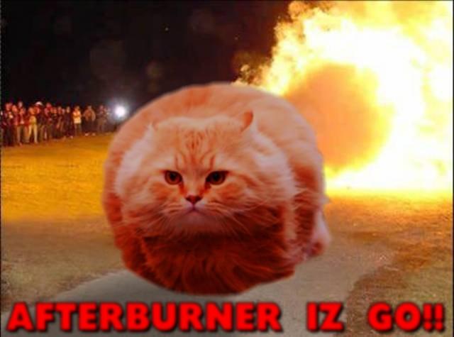 Cats At Night Meme
