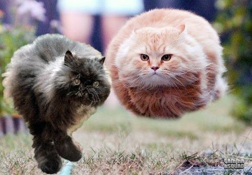 hovercat-and-two-legged-cat.jpg
