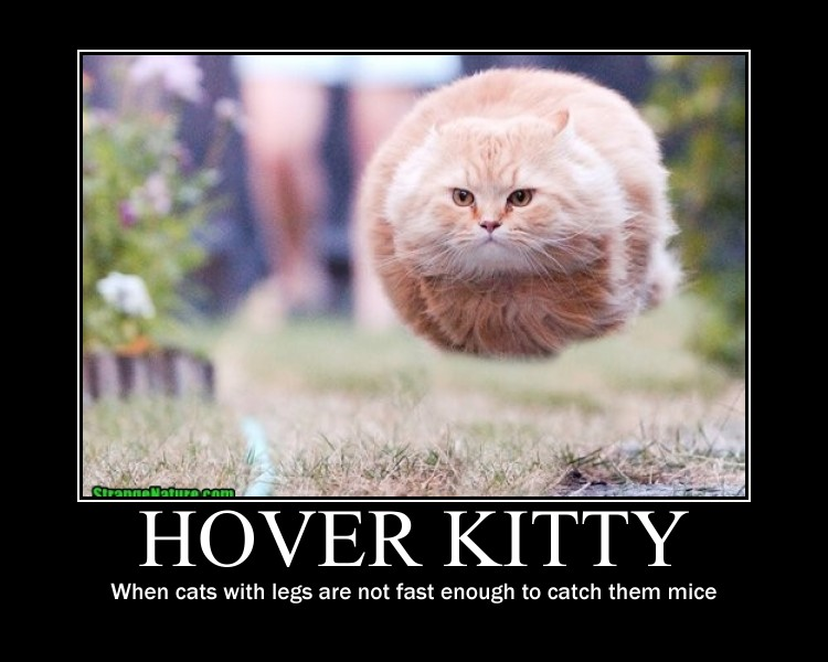 hover_cat_by_rubythewitch-d4errhx.jpg