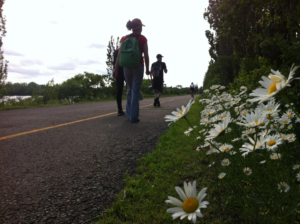 Daisies on the Embankment (narrow strip of land in the St-Lawrence Seaway)