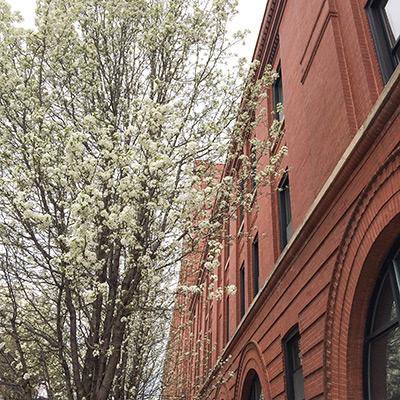Weekend-Scenes---Spring4.jpg