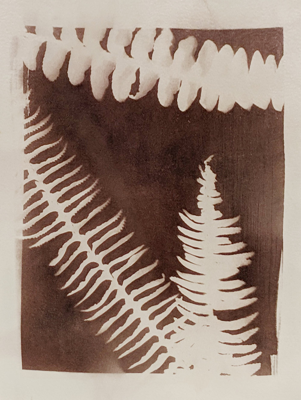 student work ferns.jpg
