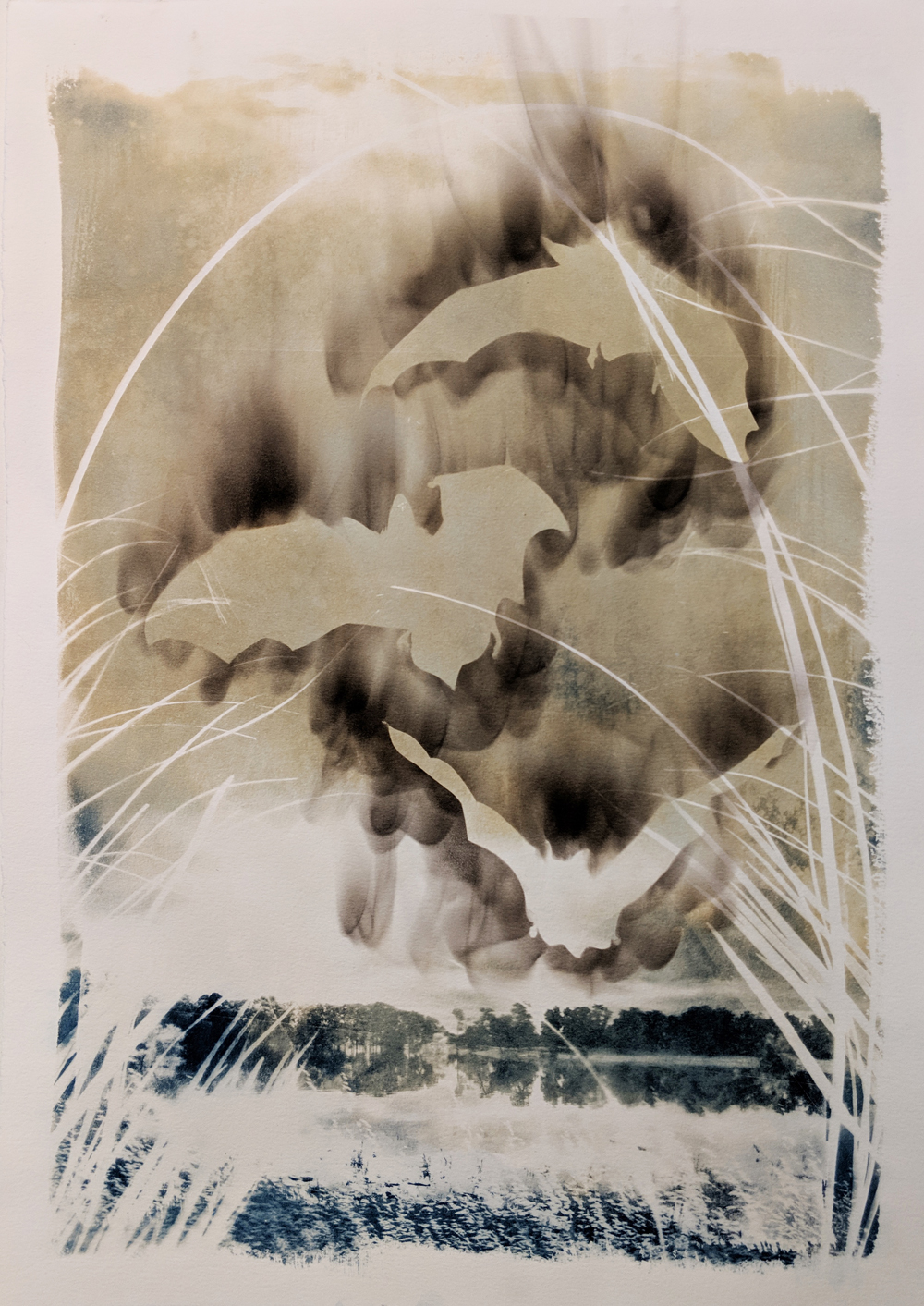 "- Northern Long Eared Bat2019Cyanotype and candle soot, 15x22""$190"