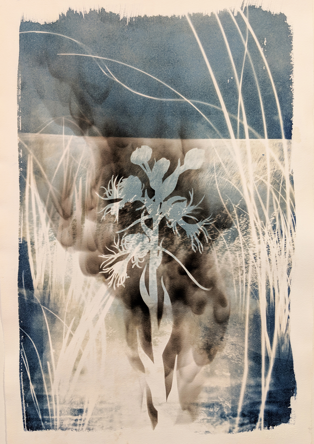 "- Eastern Prairie Fringed Orchid2019Cyanotype and candle soot, 15x22""$190"
