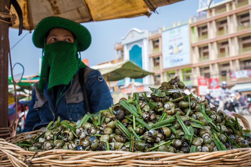 Snails Cambodia website.jpg