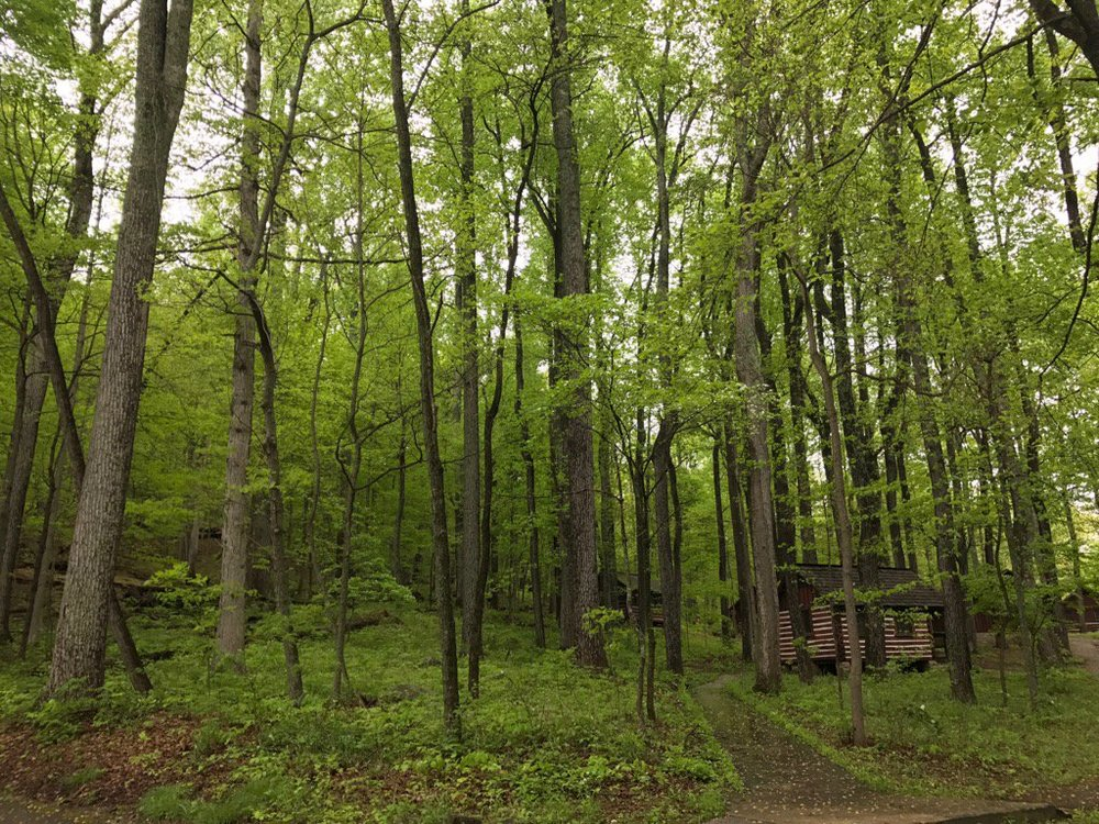 Beautiful secondary succession forest at Catoctin Mountain Park