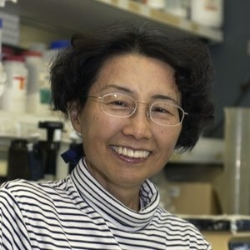 Keiko Ozato   Senior Investigator | Section on Molecular Genetics of Immunity, National Institute of Child Health & Development, National Institutes of Health