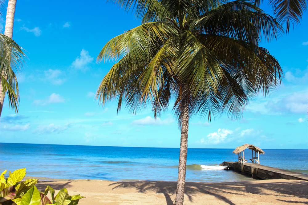 IMG_2578_realioness_tobago.jpg
