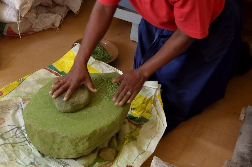 Grinding moringa leaves into powder