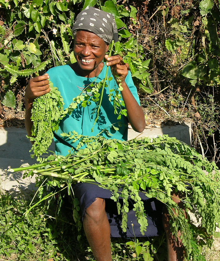A Proud Haitian woman shows her most recent moringa harvest.