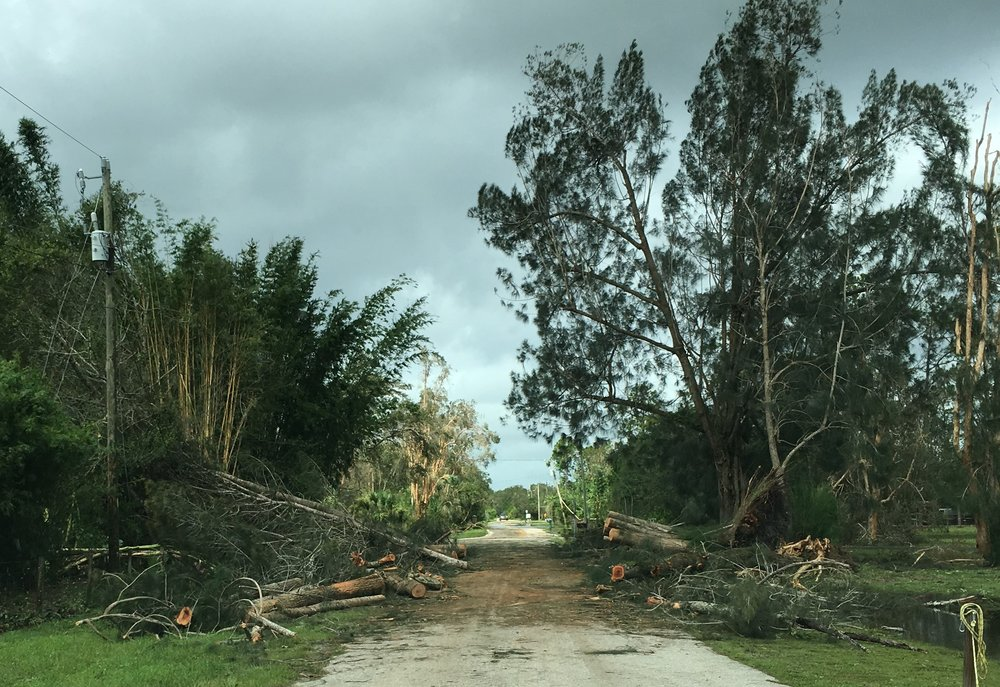 Trees on perimeter of ECHO's Global Farm had to be cut for emergency response vehicles to pass.