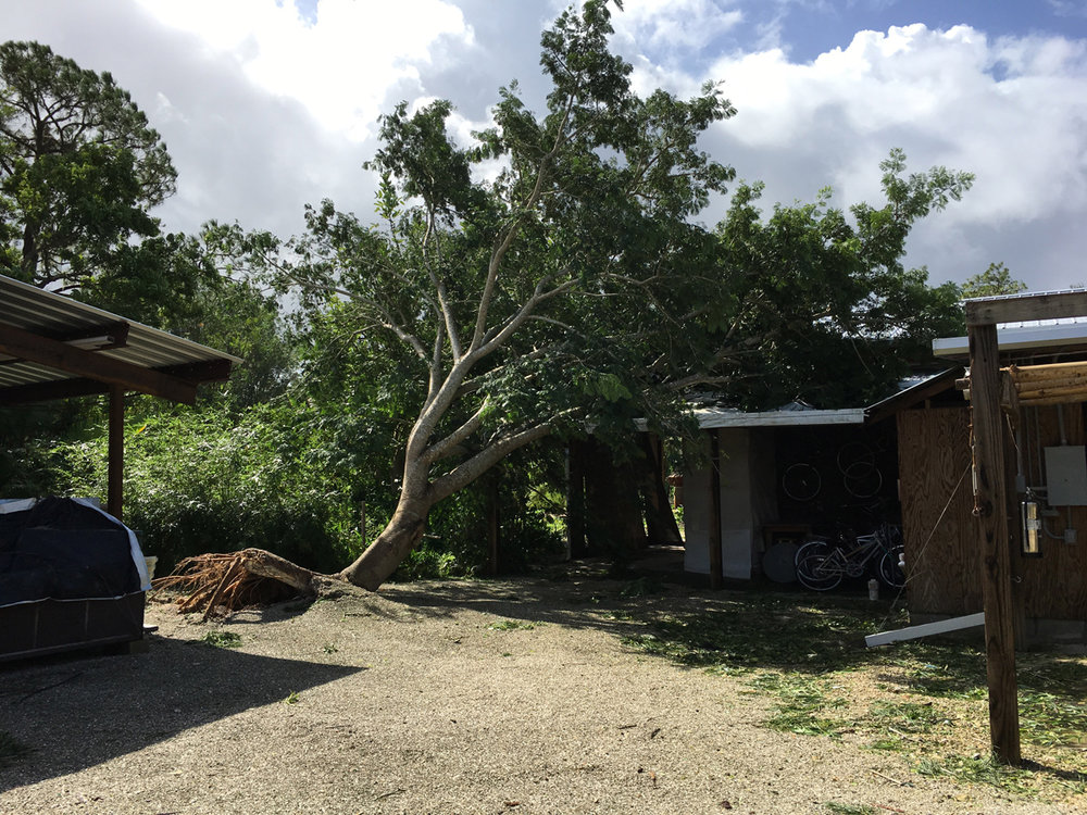 A large tree fell on the Appropriate Technology shop