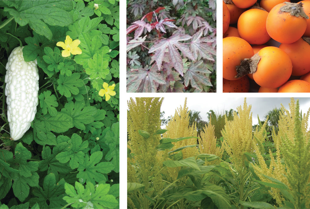 Introduction to Tropical and Underutilized Crops - September 10-14, 2018