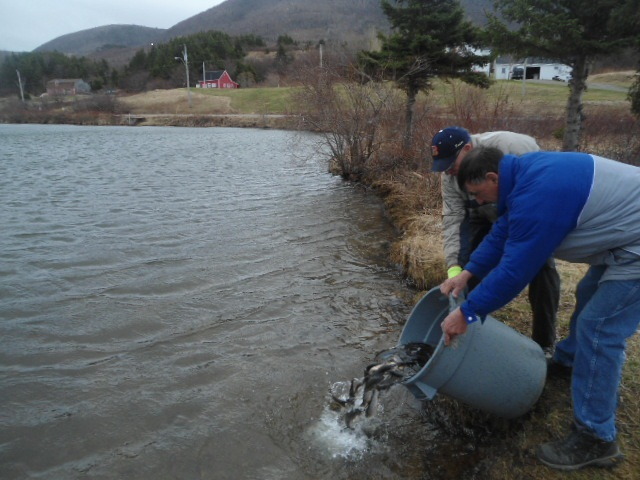 trout stocking.jpg