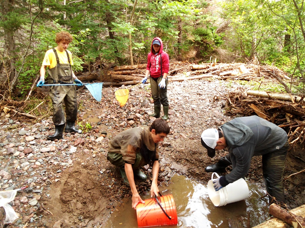 Relocating fry Aucoin Brook post storm event.JPG