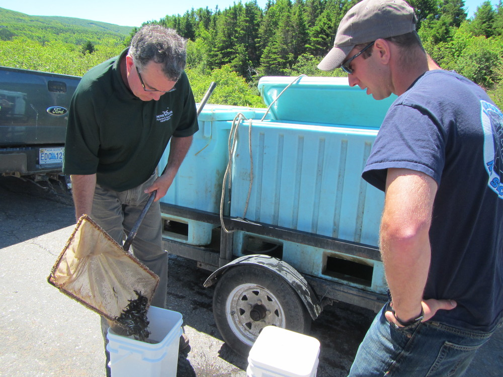 ~25,000 trout were introduced to local watercourses, with help from Mark Larade and new CRSA employee, Lauren Grant.